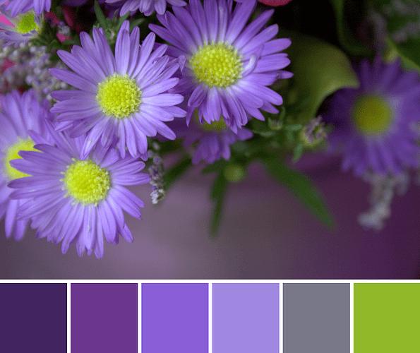 img_1832-cr2-palette-1